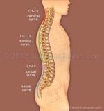 Spine-curves