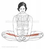 Baddha-Konasana-_-Bound-angle-pose