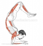 Vrschikasana-_-Scorpion-pose