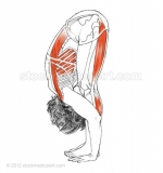 Uttanasana-_-Standing-forward-bend