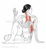 Ardha-Matsyendrasana-_-Half-lord-of-the-fishes-pose