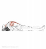 Matsyasana-_-Fish-pose